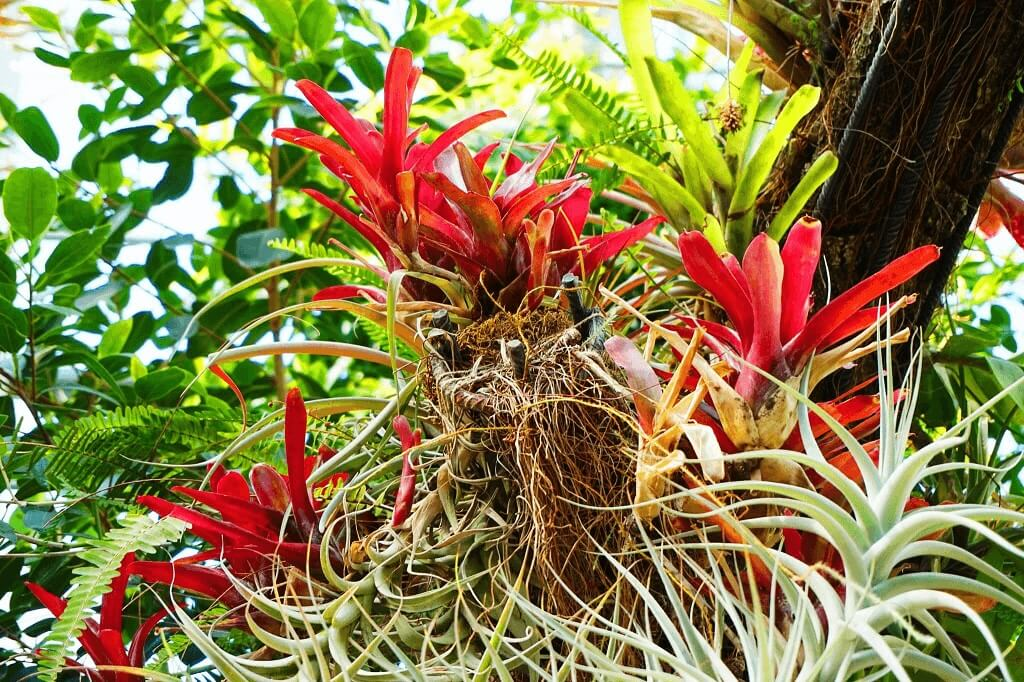 Rodzaje tillandsii sklep tropical garden